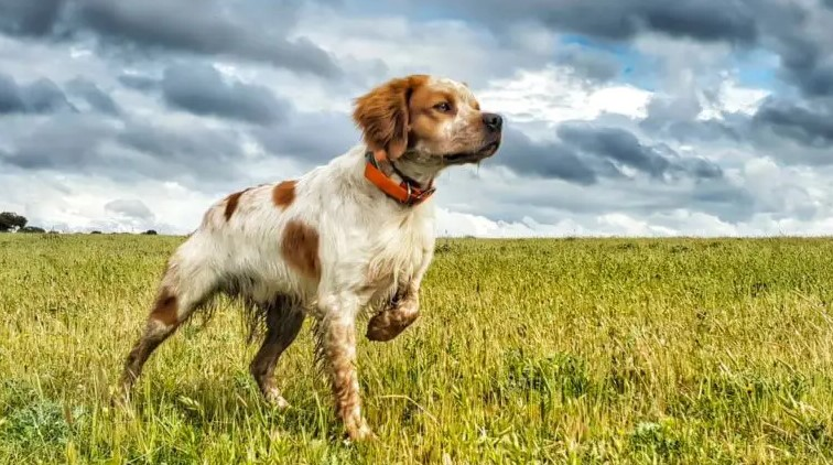 11 Guidelines to Train Your Hunting Dog Correctly